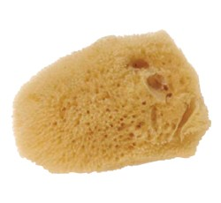 Small Sea Silk Sponge